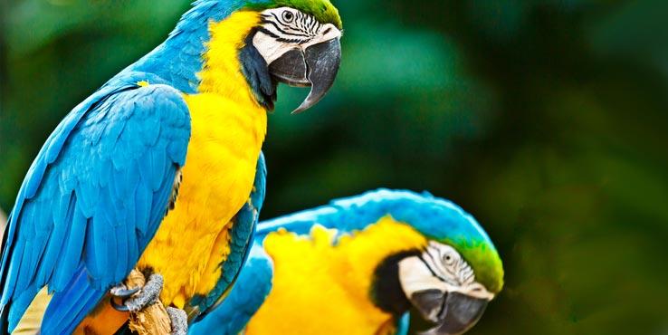Kreuzfahrt Südamerika Urlaub
