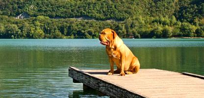 Urlaub mit dem Hund Italien Gardasee