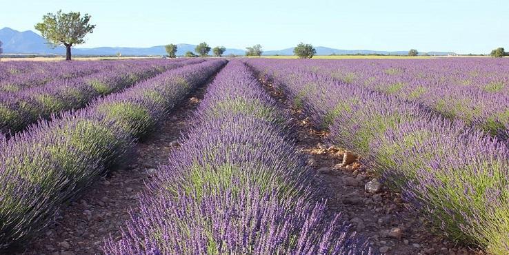Frankreich Urlaub Provence