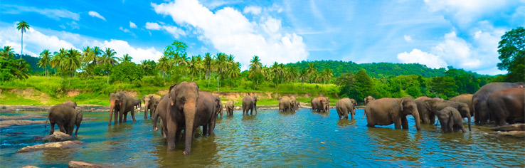 Last Minute Sri Lanka All Inclusive