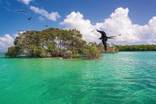Cenoten, Meereswunder und Mayawelten