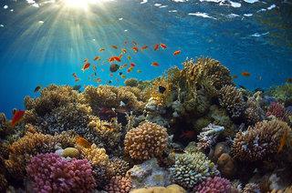 Jen Male Maldives